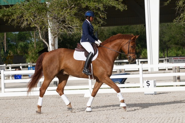 FEI 4* Judge Janet Foy Critiques Developing Riders at Palm Beach Series Schooling Dressage